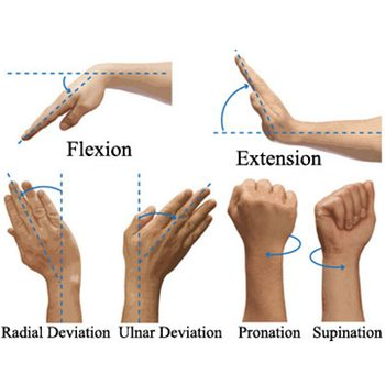 Wrist Flexibility and Strength for Bodyweight Exercises